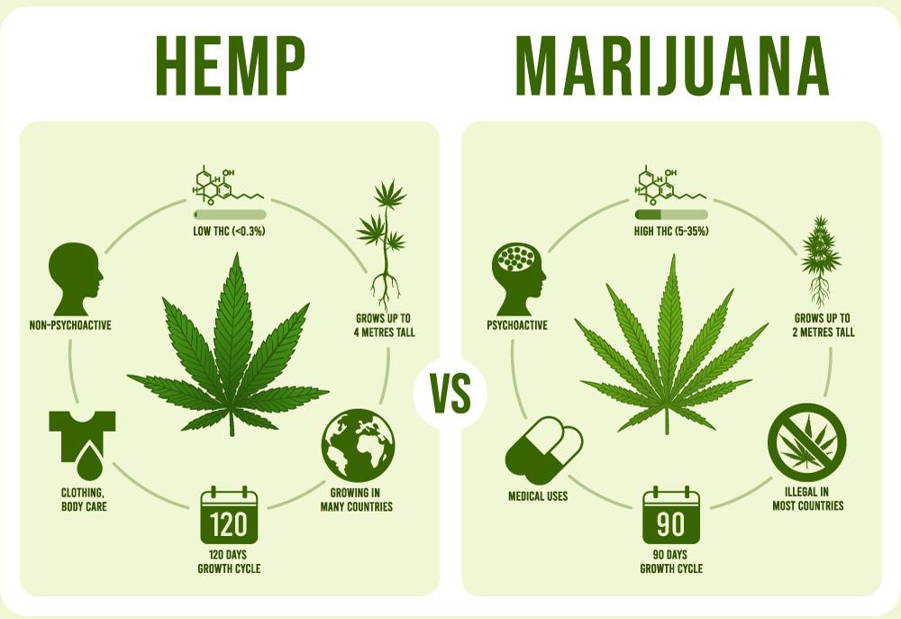 hemp-vs-marijuana